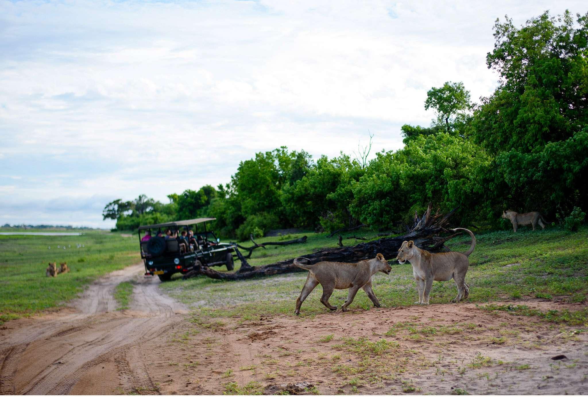 Chobe Nationalpark Botswana und Victoriafalls Zambia-29