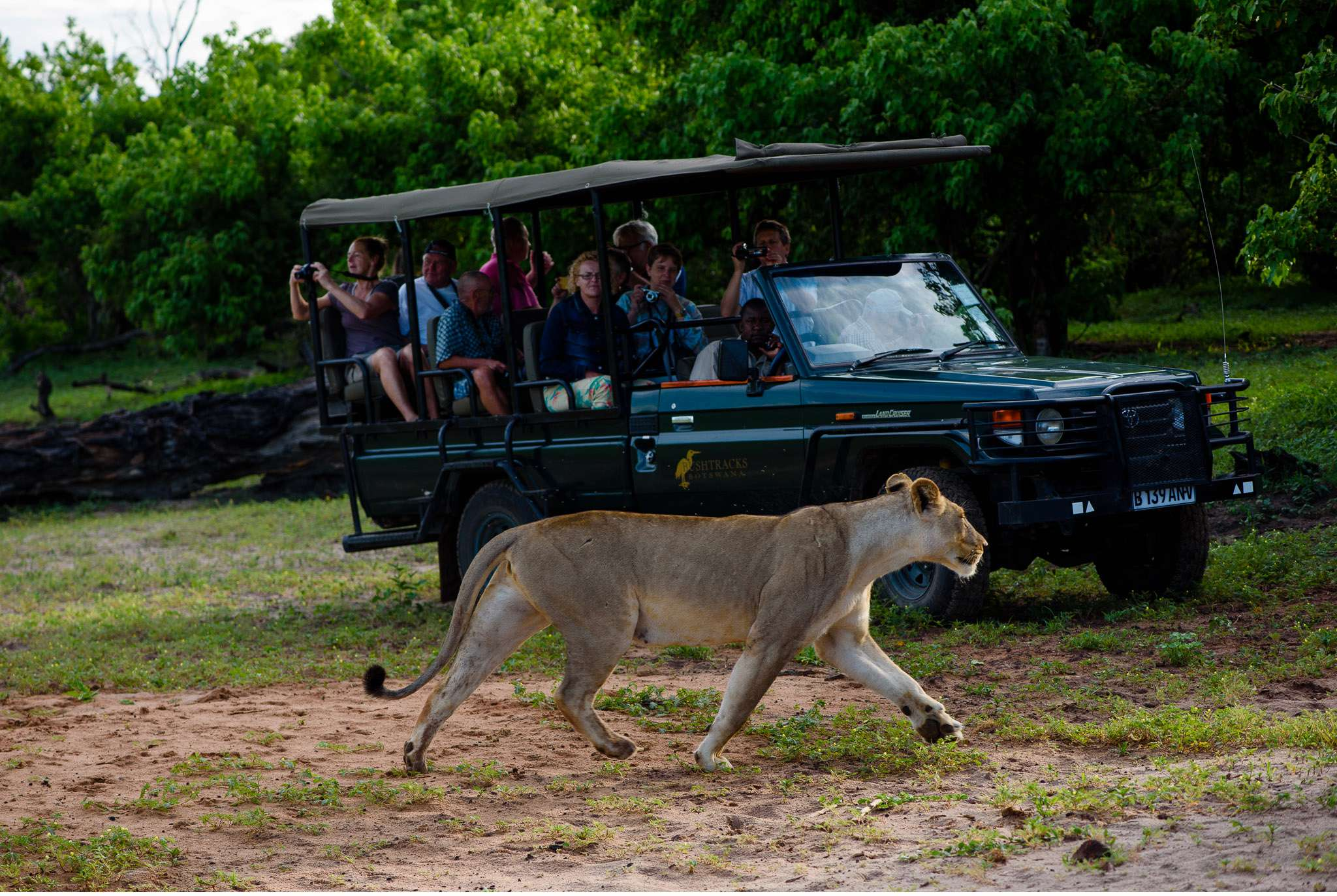 Chobe Nationalpark Botswana und Victoriafalls Zambia-34