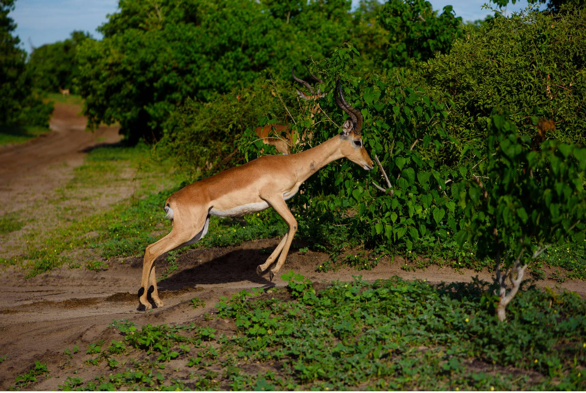 Chobe Nationalpark Botswana und Victoriafalls Zambia-36