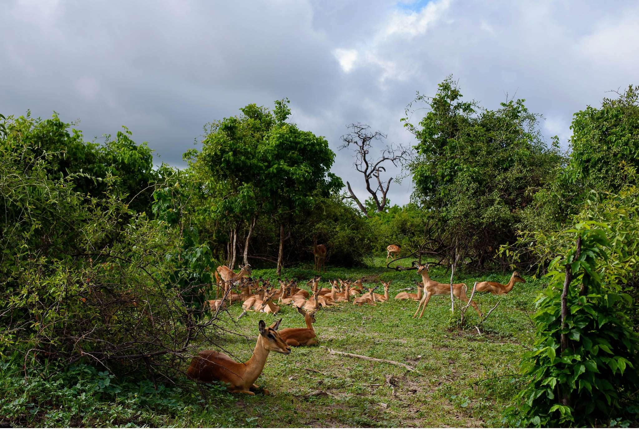 Chobe Nationalpark Botswana und Victoriafalls Zambia-52