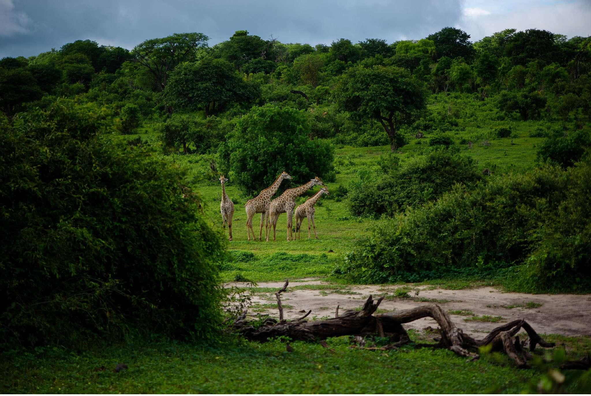 Chobe Nationalpark Botswana und Victoriafalls Zambia-55
