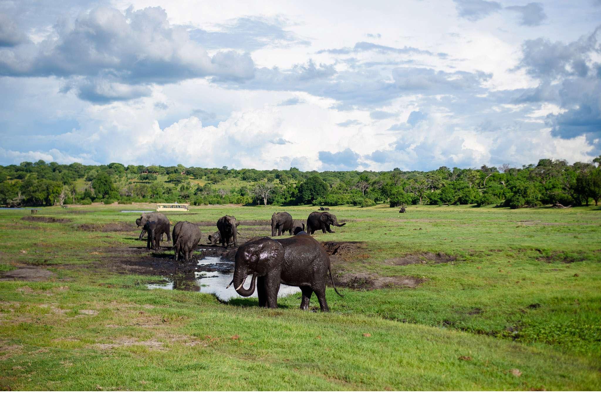 Chobe Nationalpark Botswana und Victoriafalls Zambia-79