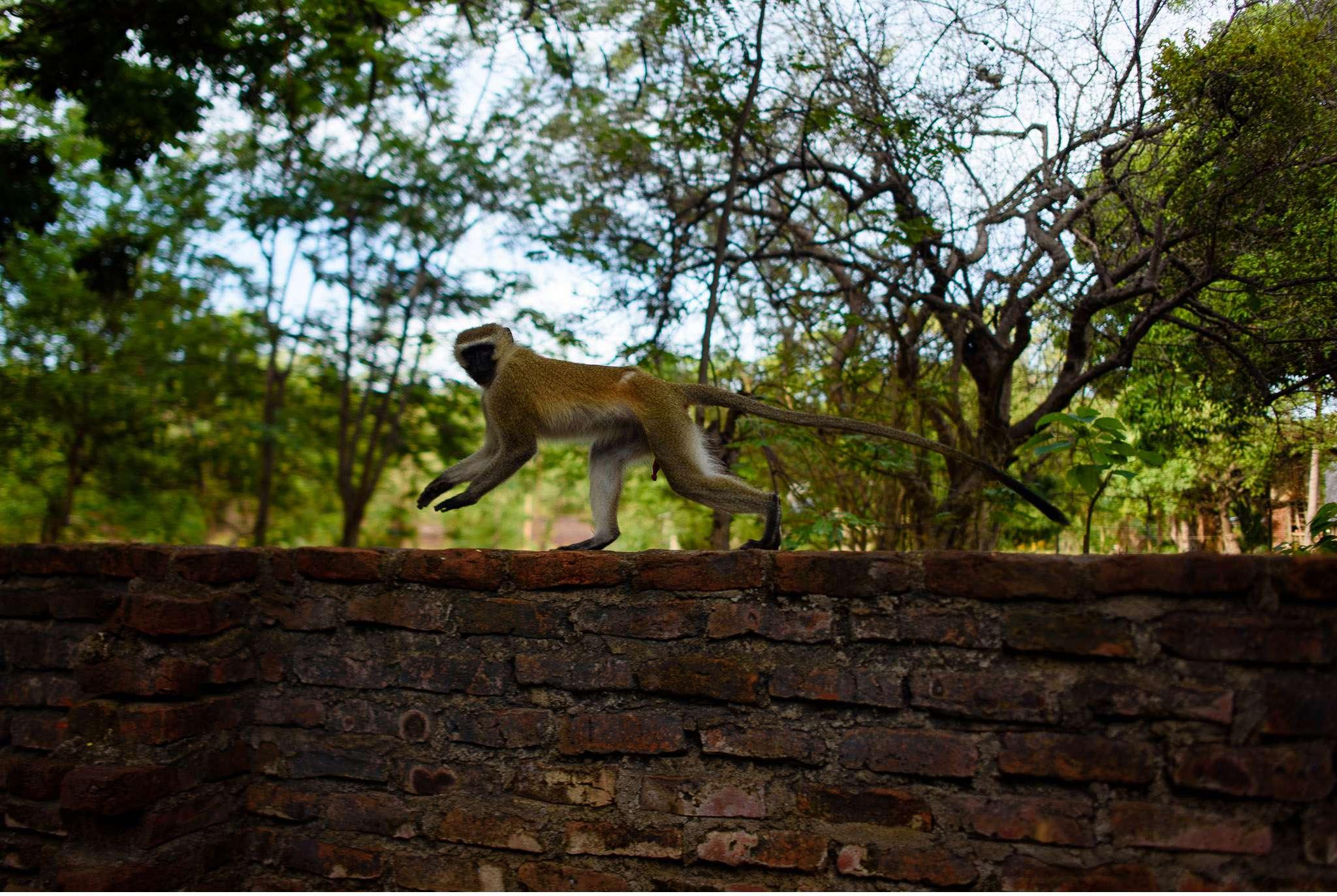 Malawi-Quer durch Afrika- Geschichten von unterwegs by Marion and Daniel-15