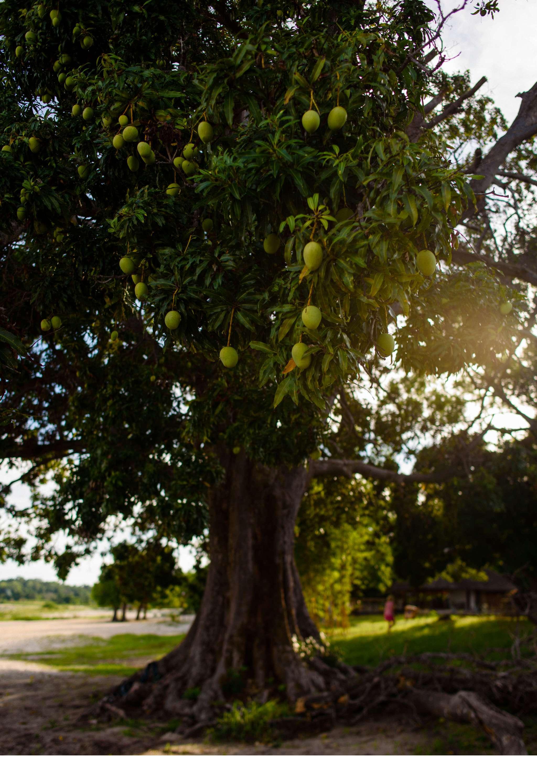 Malawi-Quer durch Afrika- Geschichten von unterwegs by Marion and Daniel-67