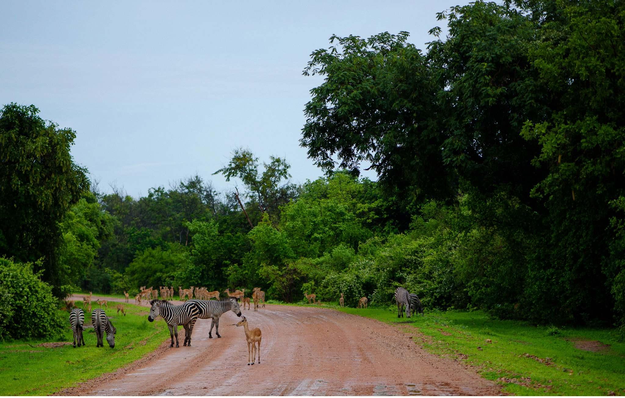 Vom South Luangwa in Zambia an den Malawi See - Marion und Daniel - Geschichten von unterwegs-40