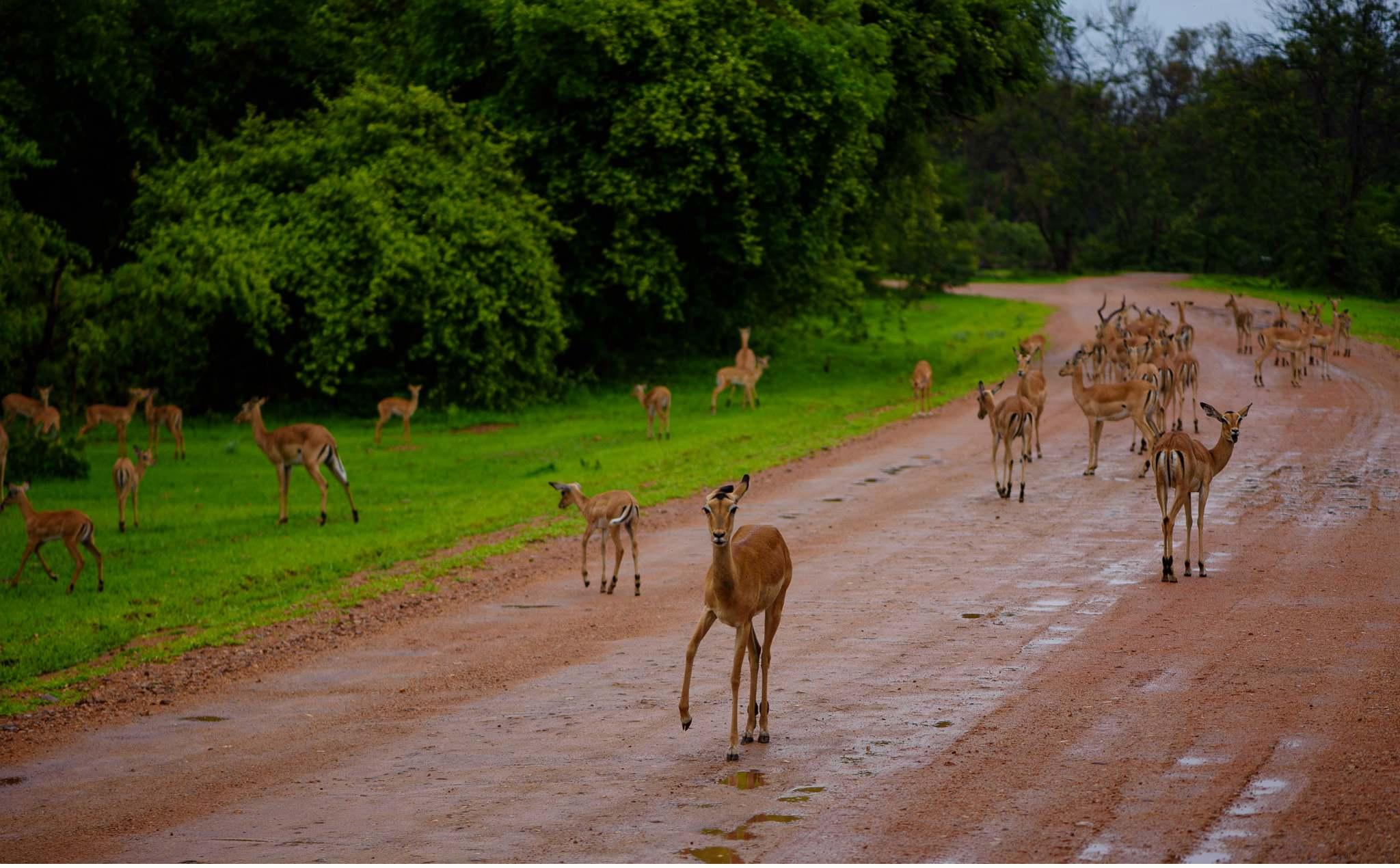 Vom South Luangwa in Zambia an den Malawi See - Marion und Daniel - Geschichten von unterwegs-42