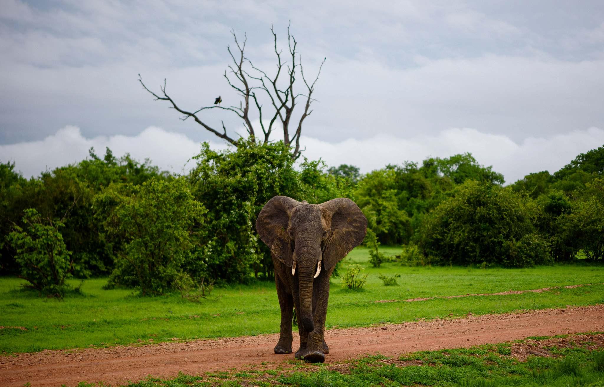 Vom South Luangwa in Zambia an den Malawi See - Marion und Daniel - Geschichten von unterwegs-49
