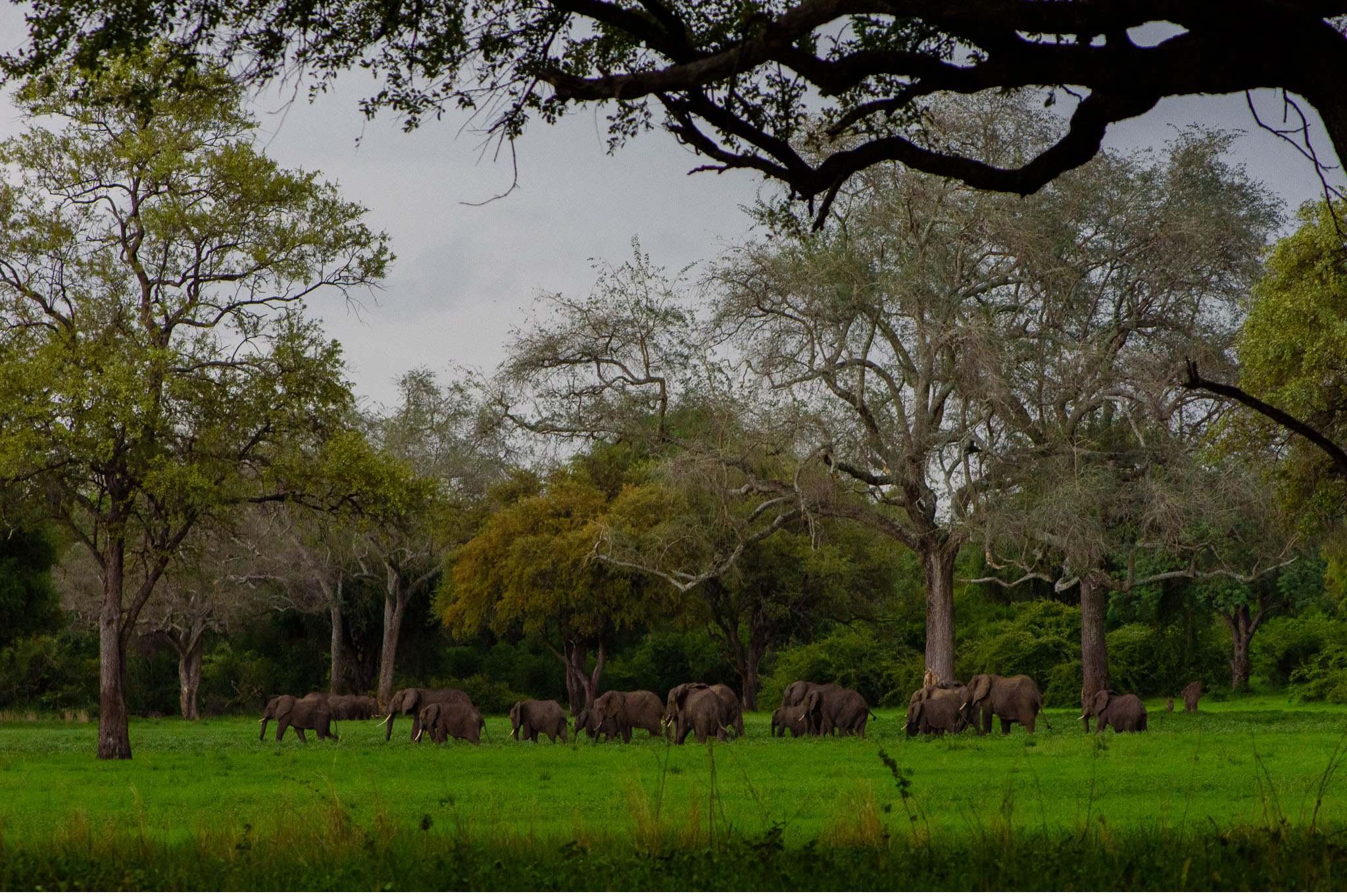 Vom South Luangwa in Zambia an den Malawi See - Marion und Daniel - Geschichten von unterwegs-89
