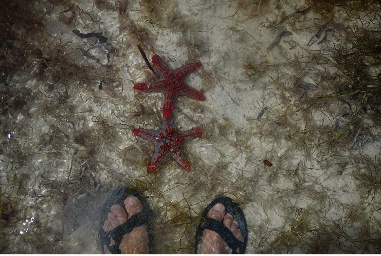 Zanzibar - Tropisches Paradies im indischen Ozean von Tanzania - Geschichten von unterwegs-104