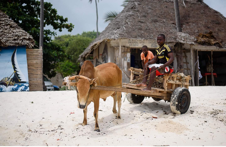 Zanzibar - Tropisches Paradies im indischen Ozean von Tanzania - Geschichten von unterwegs-105