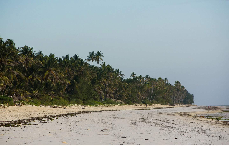 Zanzibar - Tropisches Paradies im indischen Ozean von Tanzania - Geschichten von unterwegs-44