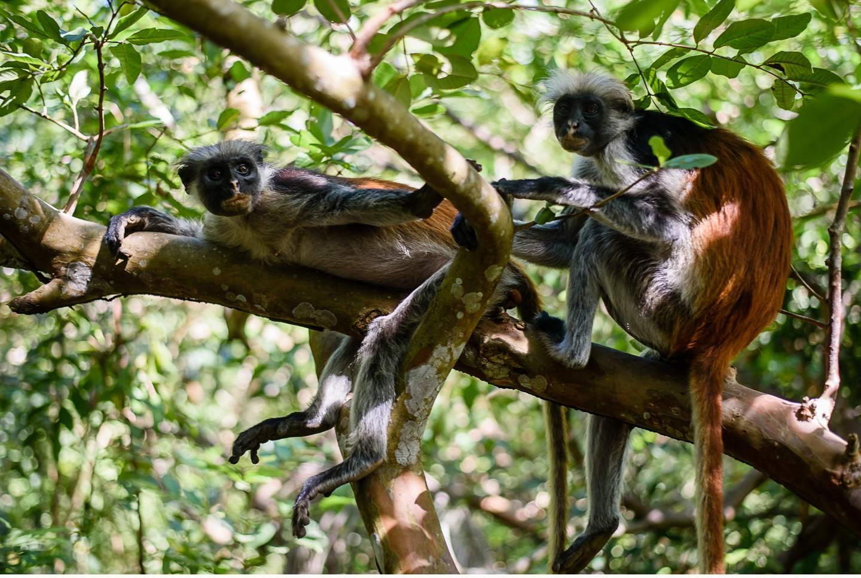 Zanzibar - Tropisches Paradies im indischen Ozean von Tanzania - Geschichten von unterwegs-62