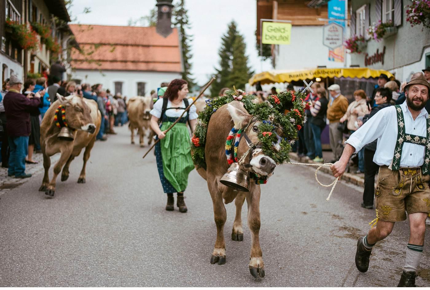 Viehscheid - Almabtrieb in Kranzegg, Allgäu
