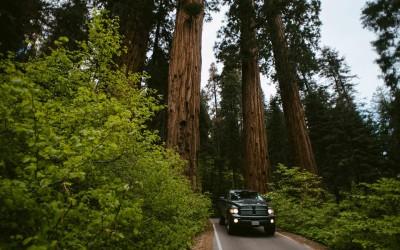 Sequoia Nationalparkin Kalifornien – Nützliche Tipps und Infos
