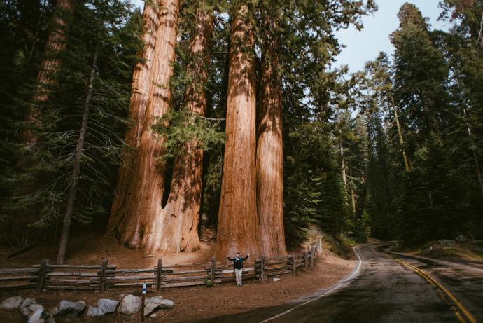 sequia-nationalpark-in-kalifornian-usa-22-von-28