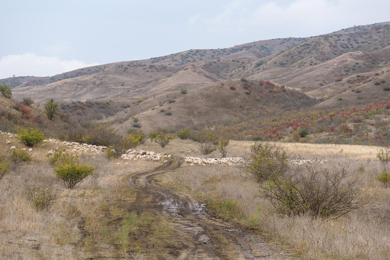 Roadtrip Georgien - Sighnaghi - Vashlovani - Prometheus Höhle Kutaissi-20