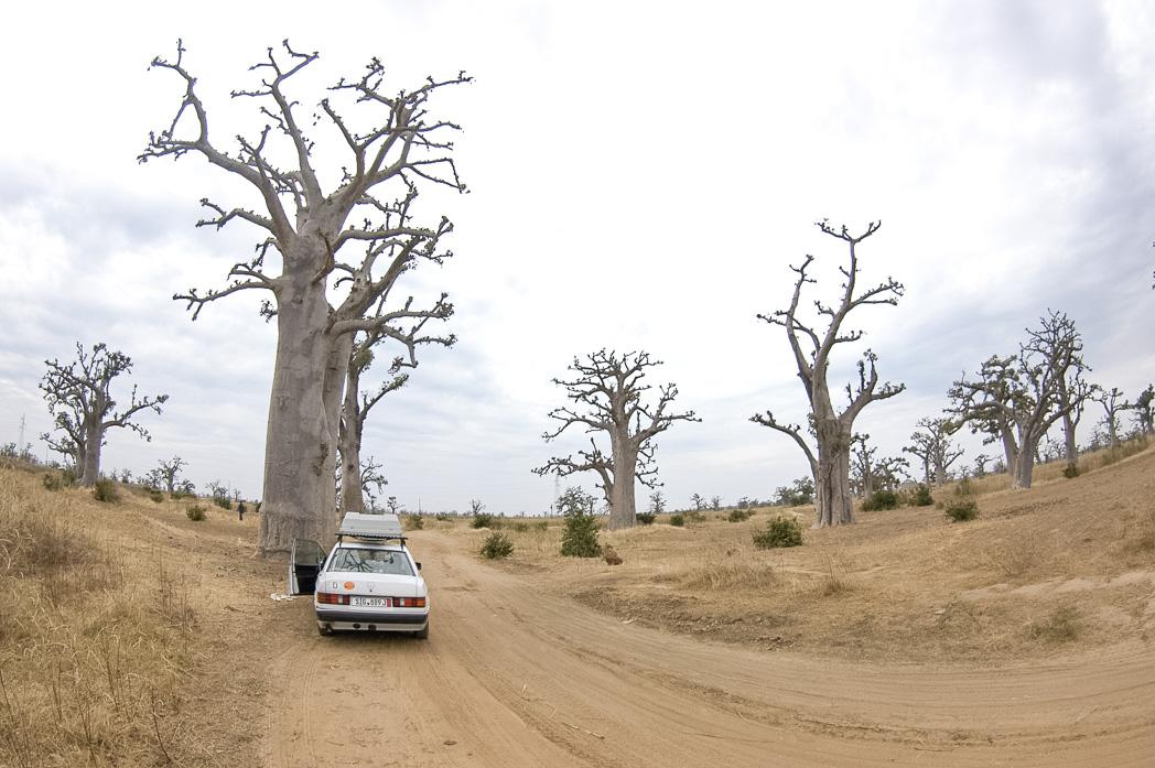 Senegambia- Eine Reise rund um Afrika-24