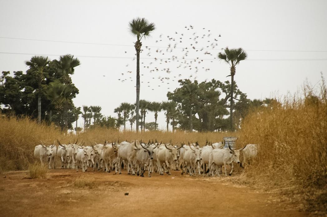 Senegambia- Eine Reise rund um Afrika-32