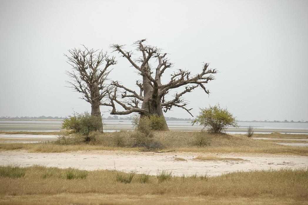 Senegambia- Eine Reise rund um Afrika-33