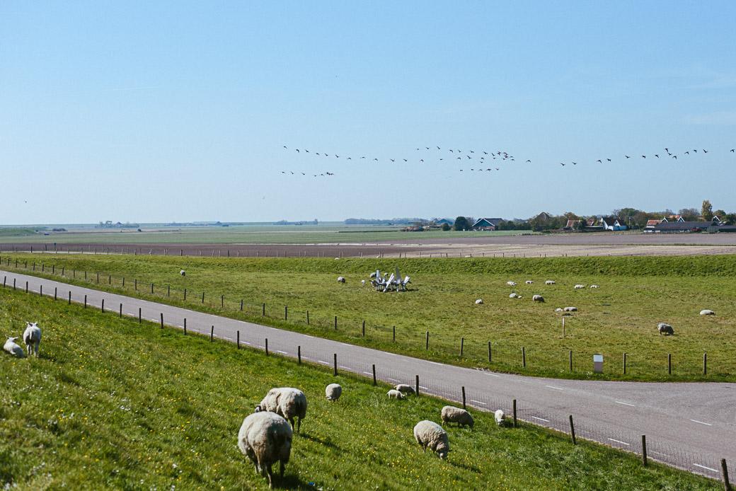 Texel-Nordsee-Holland-Niederlande-Europa-Geschichten von unterwegs-8218