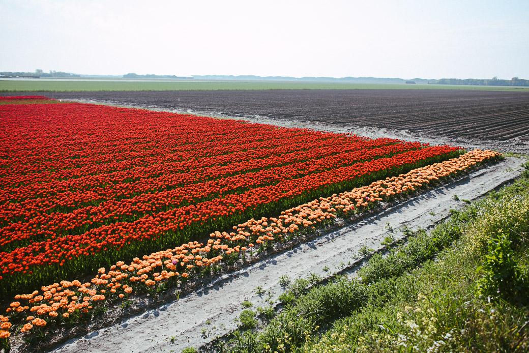 Texel-Nordsee-Holland-Niederlande-Europa-Geschichten von unterwegs-8724