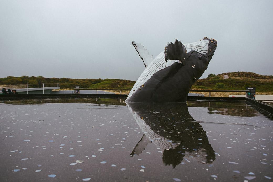 Texel-Nordsee-Holland-Niederlande-Europa-Geschichten von unterwegs-8856