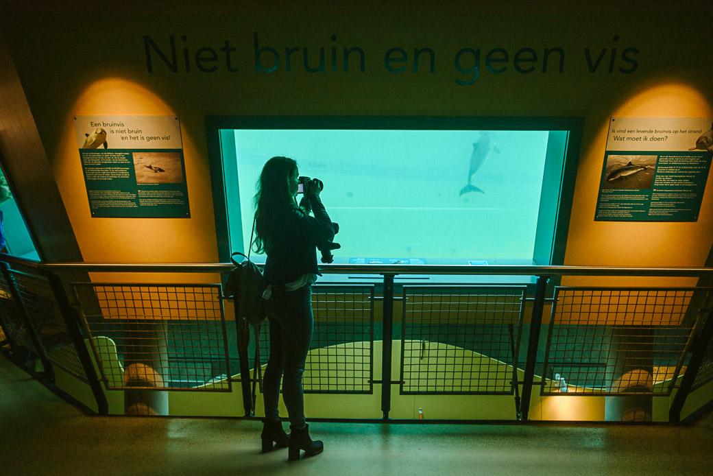 Texel-Nordsee-Holland-Niederlande-Europa-Geschichten von unterwegs-8946