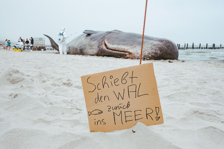 Horizonte Zingst - Waldemo - Fotofestival - Ostsee - Geschichten von unterwegs (6 von 13)