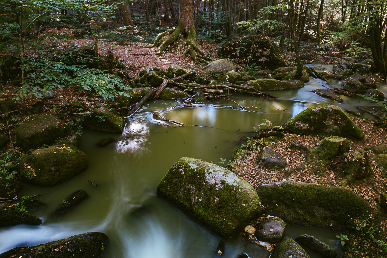 Naturschutzgebiet Hölle - Regensburg - Geschichten von unterwegs -3452