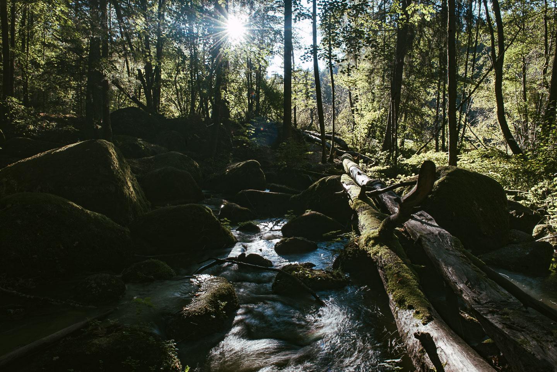 Naturschutzgebiet Hölle - Regensburg - Geschichten von unterwegs -3613
