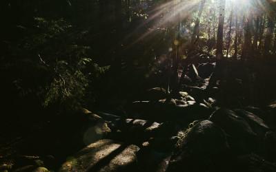 Magischer Ort – Das Naturschutzgebiet Hölle bei Regensburg