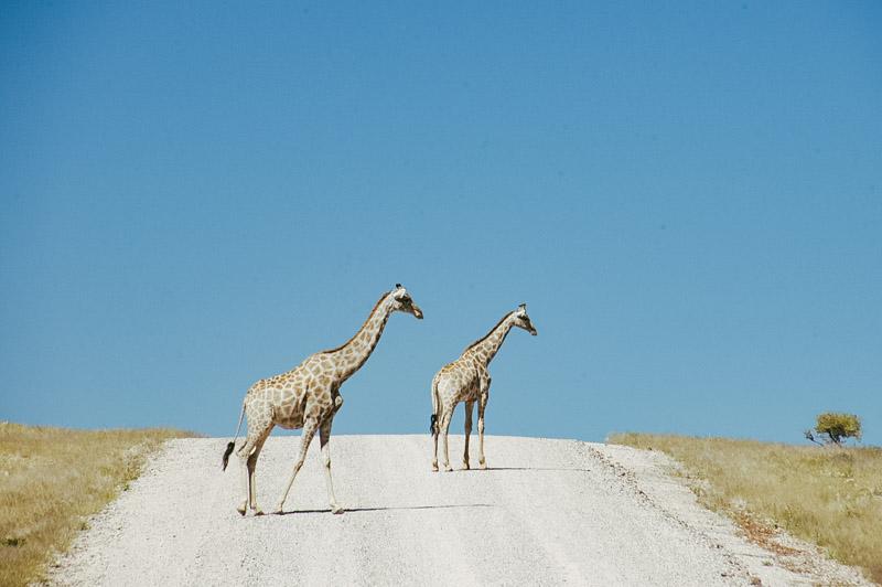 Namibia-Africa-Overland-36