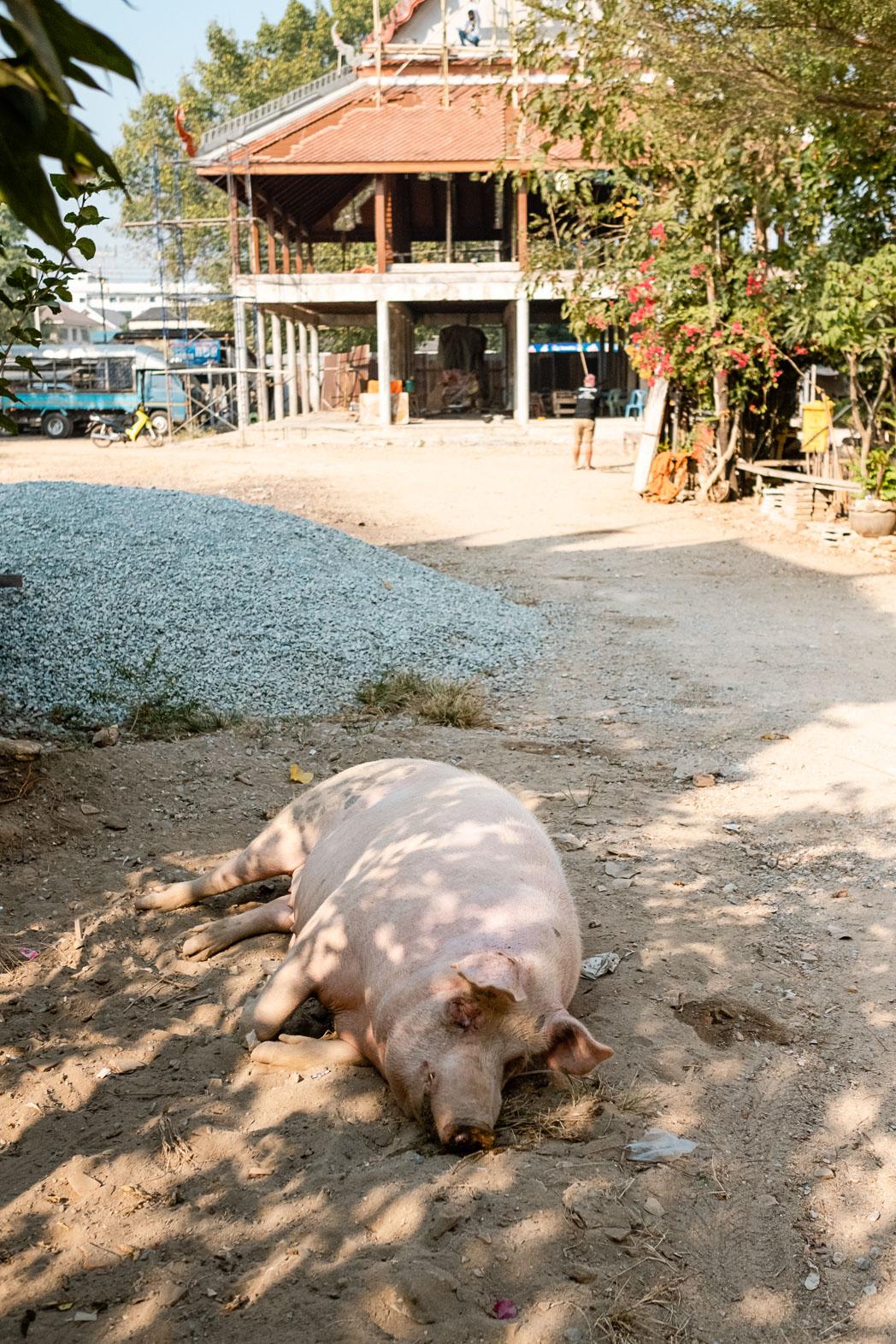 Old Sukhothai - Thailand - Geschichten von unterwegs-14