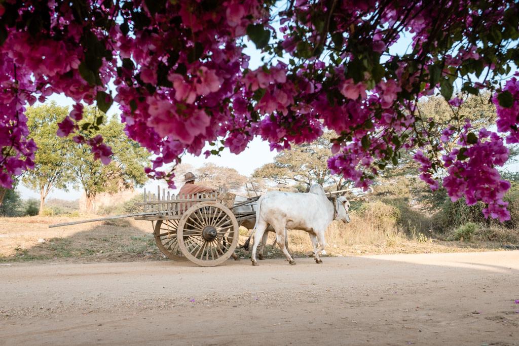Bagan-Myanmar-Burma-12